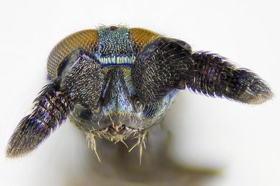 20121225_cerapteroceroides_e